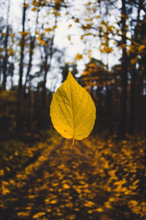 Autumn Sandis-helvigs-158774-unsplash